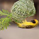 Weaver by kgb224