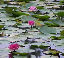Lotus of Japan by AndyCondratov