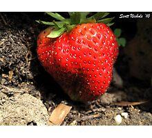 A Big Juicy Strawberry, Yum!!! Photographic Print