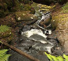 Ferntree Falls by Kay Coates