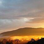 Brogo Gold- Far South NSW by evitaoz