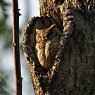 Sleepy owl by Angela1