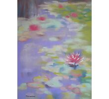 Water Lilies- Japanese Gardens, Gosford, Australia Photographic Print