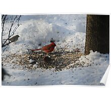 Cardinal and House Finch Poster