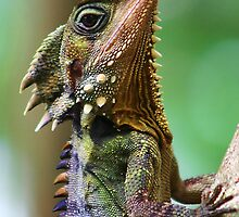 Dragon of the Daintree by LividPhoto