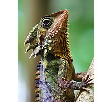 Dragon of the Daintree Photographic Print