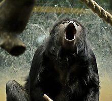 Howler Monkey or Yawning Monkey? by Ryan Davison Crisp