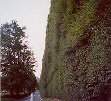 Meikleour Beech Hedge, Perthshire, Scotland by artwhiz47