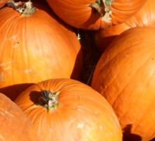 Lotta Pumpkins Sticker