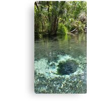 Seven Sisters Florida freshwater springs Canvas Print