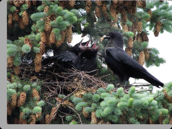 A murder of crow... by Jim Cumming