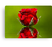 Red Rose #1 Canvas Print
