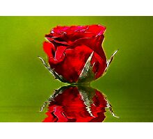 Red Rose #1 Photographic Print