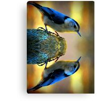 Reflecting Pool Nuthatch  Canvas Print