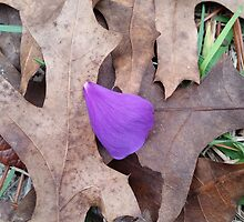 Lonely violet petal and turkey oak leaves by DariArts