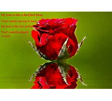 Red Red Rose #2 Photographic Print