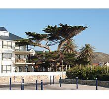 Wind blown tree Photographic Print