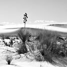 Snow in the desert III by Andrea Vallejos (nee Lindenberg)