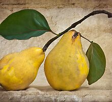 Two Quince by Leslie Nicole