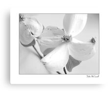 Dogwoods in Black and White Canvas Print