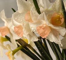 Dewy Small Daffodils with Peach Centers by Teddie McConnell