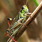 Grasshopper by Jim Cumming