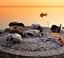 Let Sleeping Dogs Lie by Brendan Buckley