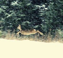 Roe doe in the snow by Alan Mattison
