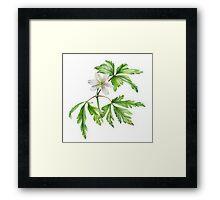 White wood anemone Framed Print