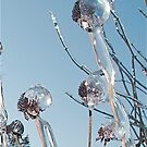Ice Encrusted Flowers by H A Waring Johnson