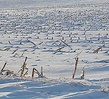 Snowy Cornfield by H A Waring Johnson