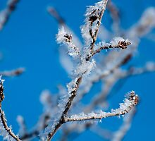 Soft rime by Joy Danen