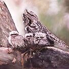 Tawney Frogmouth Family by Lyn Green