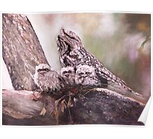 Tawney Frogmouth Family Poster