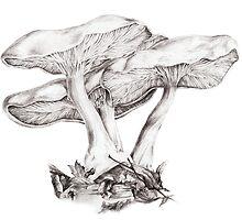 Fungi mushroom study mono pencil drawing by Sarah Trett