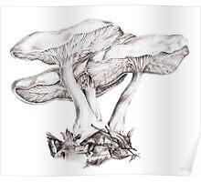 Fungi mushroom study mono pencil drawing Poster
