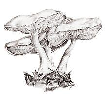 Fungi mushroom study mono pencil drawing Photographic Print