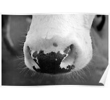 Big Nose Poster