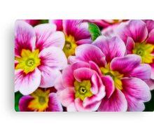 Fractalius Flowers Canvas Print