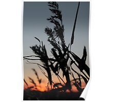Sunset In Norfolk Poster