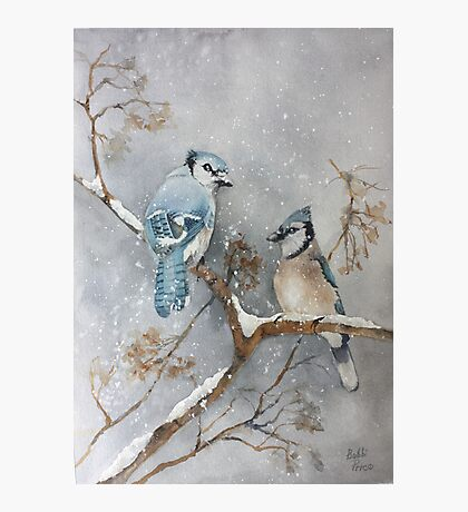 A Pair of Jays Photographic Print