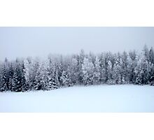 Foggy Forest Photographic Print
