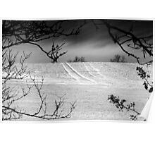 Trees Frame Trees BW Poster