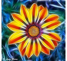Mystical Marigold Photographic Print