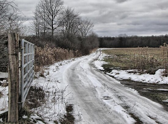 Country Lane in Ohio by Monnie Ryan