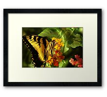 """""""BORN TO FLY """" NOT TO DIE Framed Print"""