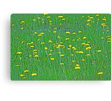 Yellow Sprinkles Canvas Print