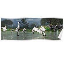 African Spoonbills Poster