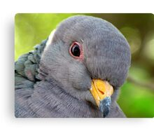 "Band-tailed ""Cutie Pie"" Pigeon Canvas Print"