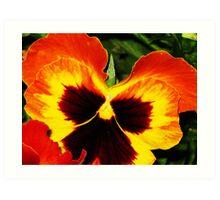 Sunset Petals Art Print